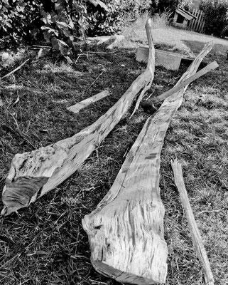 tronc d'acacia refendu