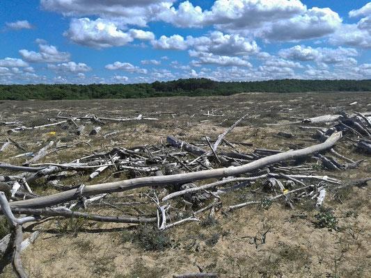 A la chasse aux bois flottés !