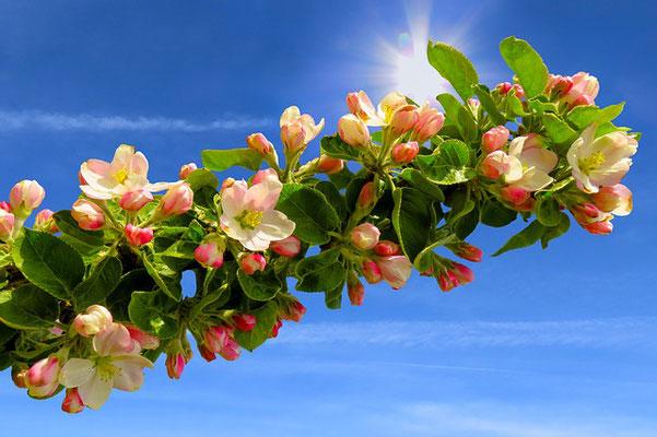 Gardons présent à l'esprit l'avenir de paix et de joie qui nous est promis, cela nous aidera à traverser les moments difficiles de la vie et en particulier la période de la Grande Tribulation qui approche à grands pas.