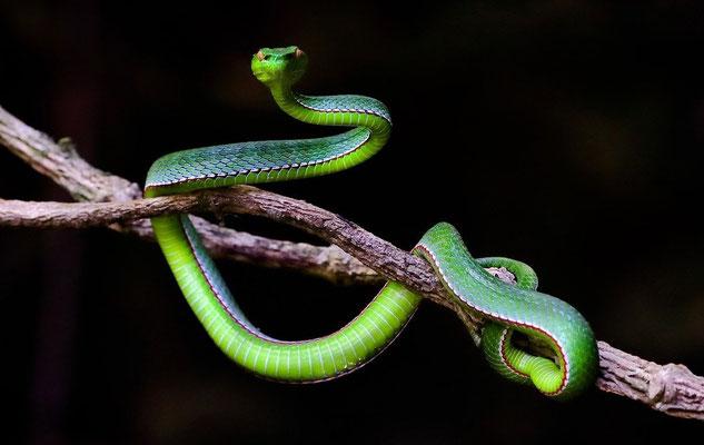 Dans le Lévitique et le Deutéronome, les animaux interdits à la consommation les animaux ont été classés d'après leur mode de déplacement. Certains se déplaçant dans les airs, d'autres dans l'eau, d'autres encore sur la terre en marchant ou en rampant.