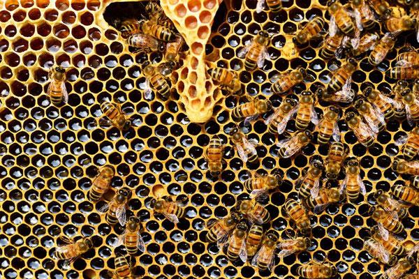 """Le miel indique la présence d'abeilles et donc de fleurs, de fruits et de légumes.  Le mot """"miel"""" est utilisé à plusieurs reprises dans la Bible dans un sens figuré pour exprimer l'abondance,  la richesse, la douceur, la sagesse, le plaisir, …"""