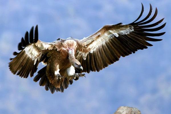 Un ange invite tous les oiseaux volant haut dans le ciel au grand festin de Dieu pour manger la chair des rois, des militaires, des hommes petits et grands tués par l'épée qui sort de la bouche du chef des anges.