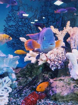 Ou bien parle à la terre, et elle t'instruira, les poissons de la mer pourront t'en informer. Oui, parmi tous ceux-ci, lequel ignorerait que c'est Dieu qui a fait cela ?