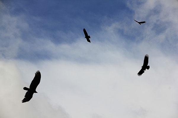 Tous les oiseaux qui volent haut dans le ciel ont été invités au grand festin de Dieu afin de se rassasier de la chair des puissants et de la chair de tous les hommes, les grands et les petits.
