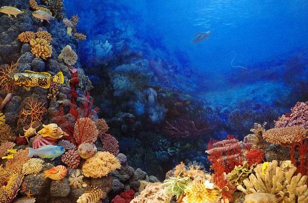 La mer Rouge a une longueur de 2000 km et une largeur de 300 km. On y trouve une profusion de vie sous-marine. C'est la mer Rouge qui a été traversée miraculeusement par Moïse après qu'elle se soit fendue en deux.
