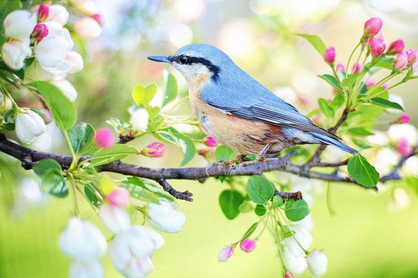 Interroge donc les animaux sauvages, ils t'instruiront, et les oiseaux du ciel, ils te renseigneront. Ou bien parle à la terre, et elle t'instruira, les poissons de la mer pourront t'en informer. Oui, lequel ignorerait que c'est Dieu qui a fait cela?