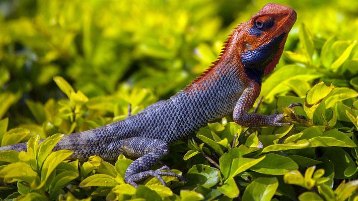 Dieu dit: «Que la terre produise des animaux vivants selon leur espèce: du bétail, des reptiles et des animaux terrestres selon leur espèce.»