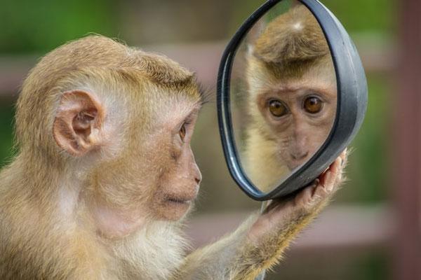La création de Jéhovah Dieu témoigne de son humour. Les singes curieux qui voudraient fouiller dans vos affaires, le paresseux qui semble sourire en permanence et vous serre comme si vous étiez un tronc d'arbre…
