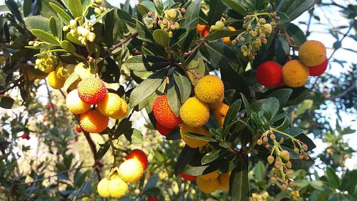 Dans le Paradis terrestre, la terre produira abondance de fruits, il n'y aura plus de famine