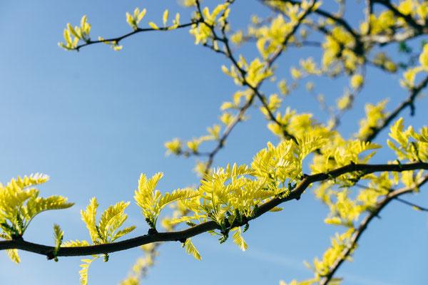 Pâques deviendra la fête de la résurrection de Jésus et non plus la commémoration de sa mort. La mort et la résurrection de Jésus ont eu lieu au printemps. Et le printemps est le symbole de la renaissance, de la fertilité, de la nature qui s'éveille.