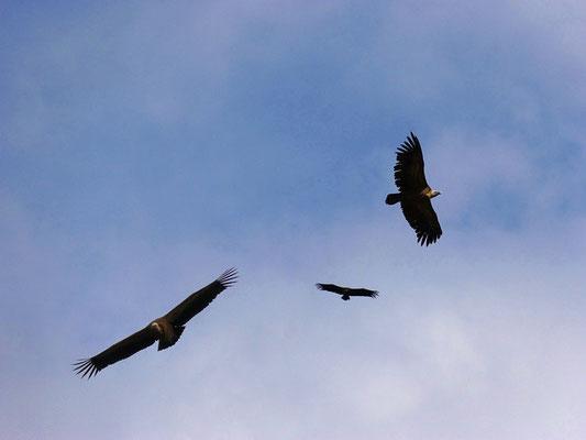 Je vis un ange debout dans le soleil. Il cria d'une voix forte à tous les oiseaux qui volaient haut dans le ciel: «Venez, rassemblez-vous pour le grand festin de Dieu afin de manger la chair des rois, la chair des chefs militaires et de tous les hommes.