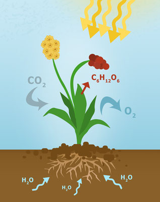 Jésus existait avant les premières plantes photosynthétiques; avant les premières molécules d'eau et le cycle de l'eau naturel qui alimente toute vie; avant la création du code génétique.