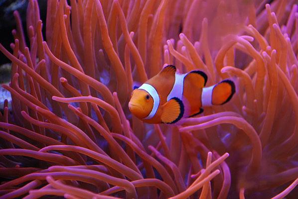 Interroge donc les animaux sauvages, ils t'instruiront, et les oiseaux du ciel, ils te renseigneront. Ou bien parle à la terre, et elle t'instruira, les poissons de la mer pourront t'en informer. Il tient en son pouvoir la vie de tous les êtres.