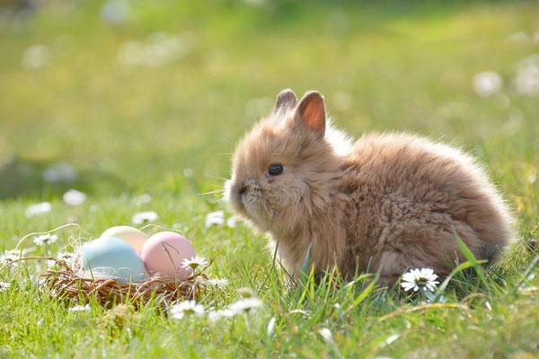 La résurrection de Jésus a été associée au retour à la vie ou au réveil de la nature. Les lapins, les poules et les œufs sont des symboles de fertilité qui n'ont aucun lien avec Jésus-Christ.