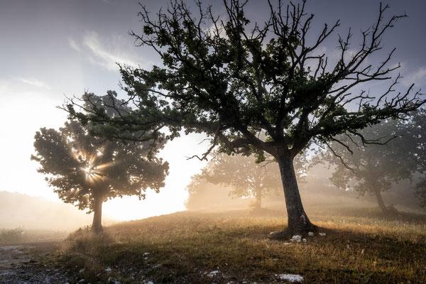 foto © Roberto Nencini