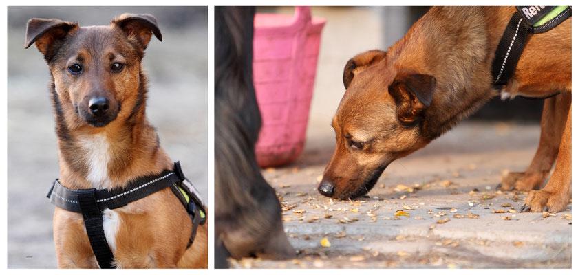 COR3 - Reittherapie-Hund Seppel