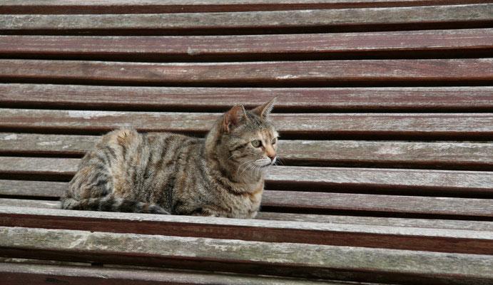 Katze in Begur I