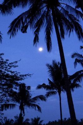 Blauer Nachthimmel - Bali
