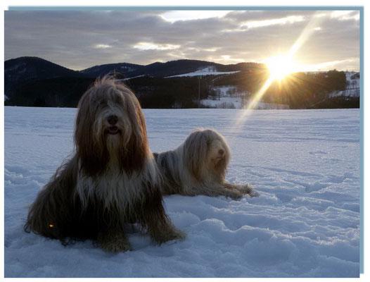 Beardies und Sonnenstrahlen - Universalheilmittel aus der Himmelsapotheke