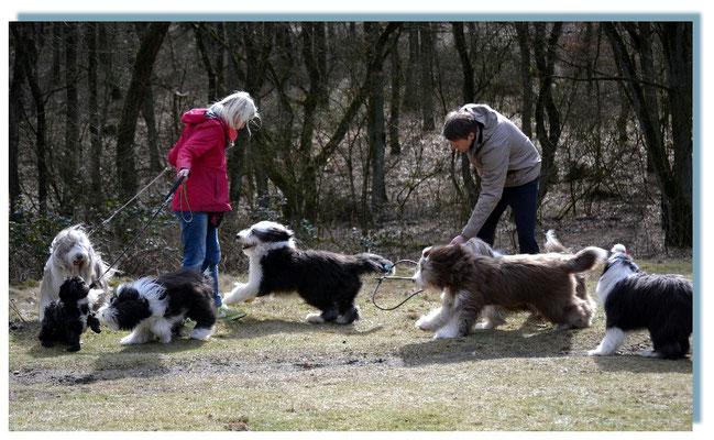 Neue Besucher auf der Hundewiese