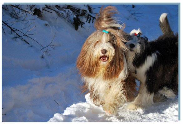Easy und Mina hatten viel Freude im Schnee