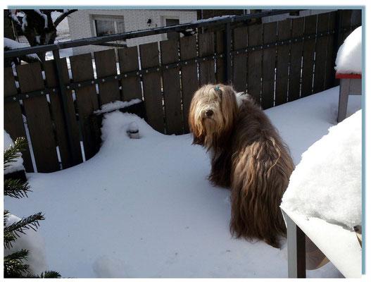 Frauchen schau, soviel Schnee auf einmal!