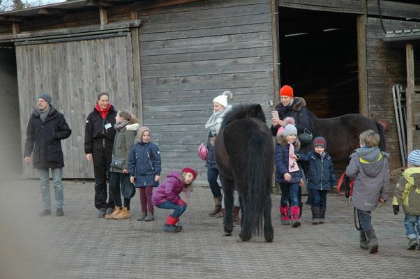 Den freilaufenden Pferden ganz nah kamen die Besucher auf dem Paddock.