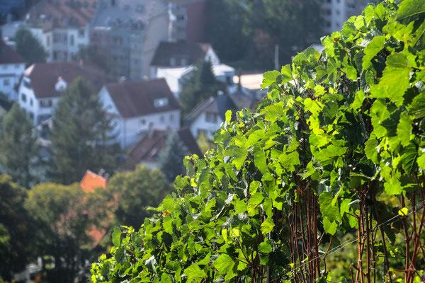 Turmbergwein