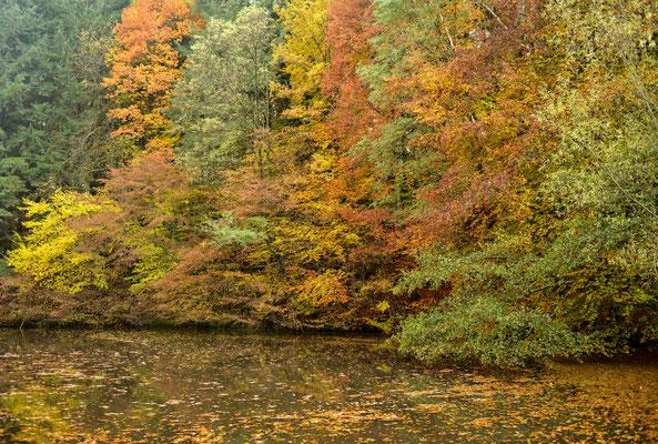 Waldsee Baden-Baden