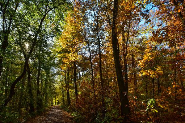 Im Weiherwald