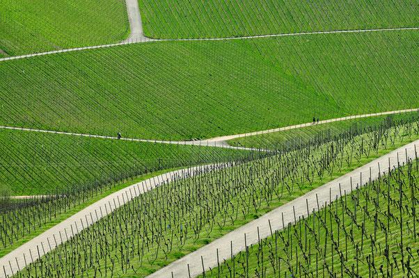 Im Weinland bei Durbach