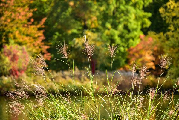 Herbst im Schlossgarten