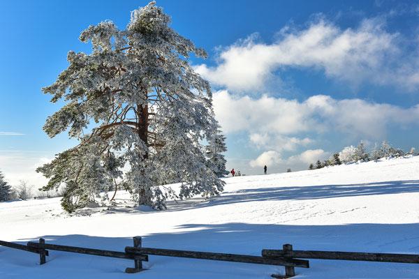 Winterwanderung auf dem Schliffkopf