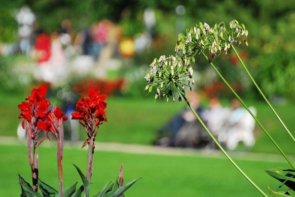 Im Botanischen Garten III