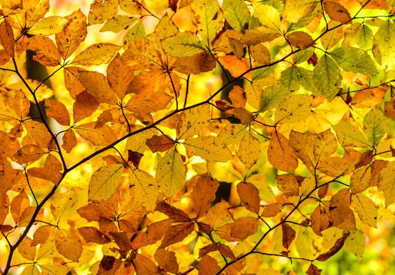 Herbst am Alten Schloss über Baden-Baden