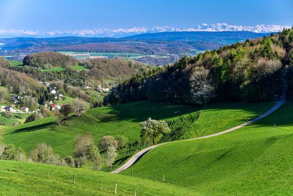 Im Südschwarzwald