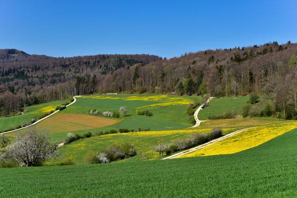 Frühling im Südschwarzwald bei Waldshut