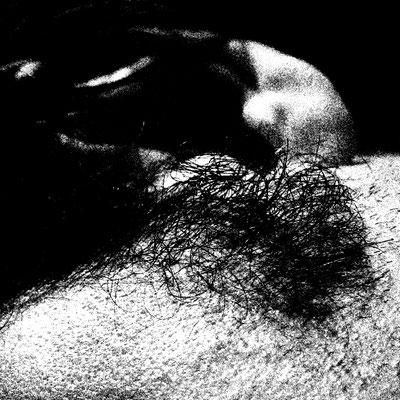 Dornbusch, 20/20 cm, bearbeitetes Foto auf Folie