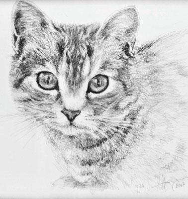 Tigerli