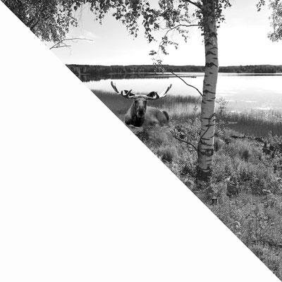 """""""Meine nordischen Wurzeln""""/Hannele Lareida-Hintikka/Club Liestal"""