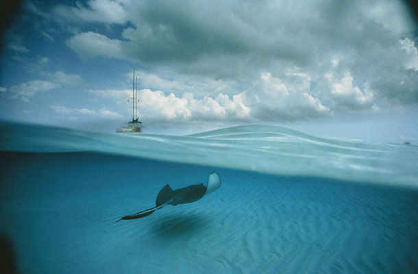 Photo by David Doubilet/National Geographic