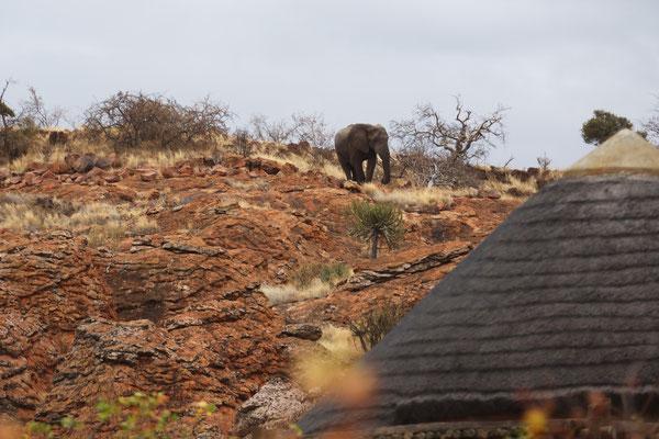 Beweisfoto vom Elefant im Leokwe Camp