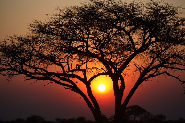 Afrika als Sehnsuchtsort