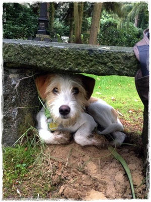 Lenny sucht Schutz gegen Regen