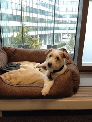Lenny im Büro