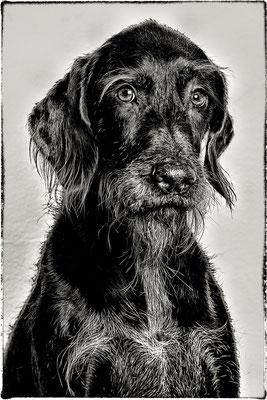 Pippa.