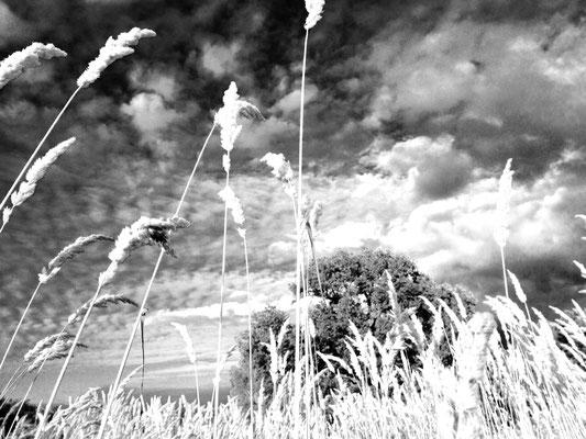 Wiesenimpression aus dem Havelland, c Amanda Hasenfusz