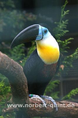 Vogelpark Walsrode - Dottertukan