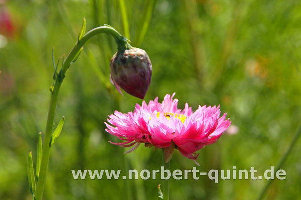 Blütenträume 1