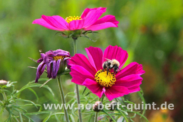 Blütenträume 6